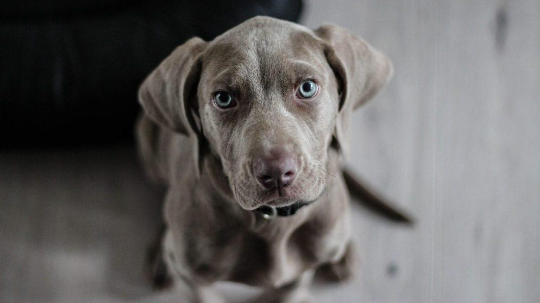perro-te-hace-caso-1440x808